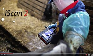 iScan2 – advanced ultrasound scanner that provides precise diagnostics for large animals