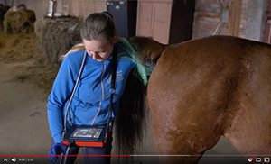 iscan 2 – convenient and precise ultrasound scanner for horse diagnostics