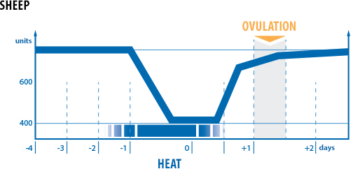 graph of sheep heat on individual days